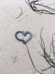 Herz aus Watt